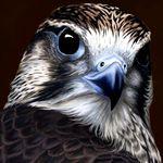 Seraf profilképe